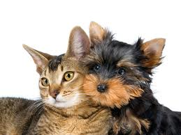 dog%20and%20cat